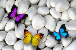 butterflies-white-stones-colorful-design-by-marika-butterfly-stones (1)