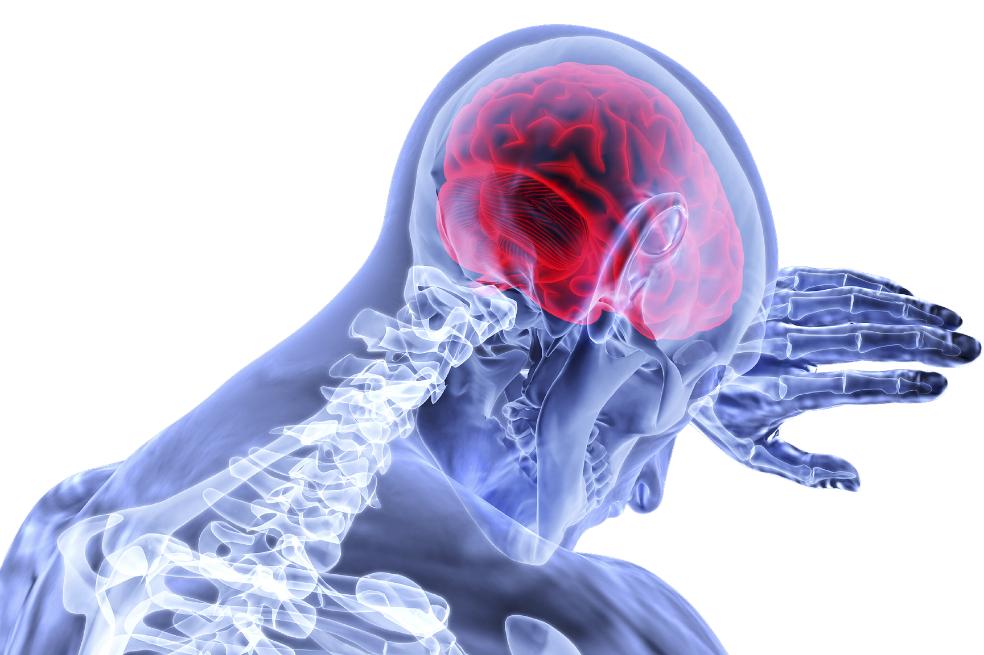brain-3168269_1920_0